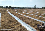 Sản xuất màng phủ nông nghiệp theo yêu cầu